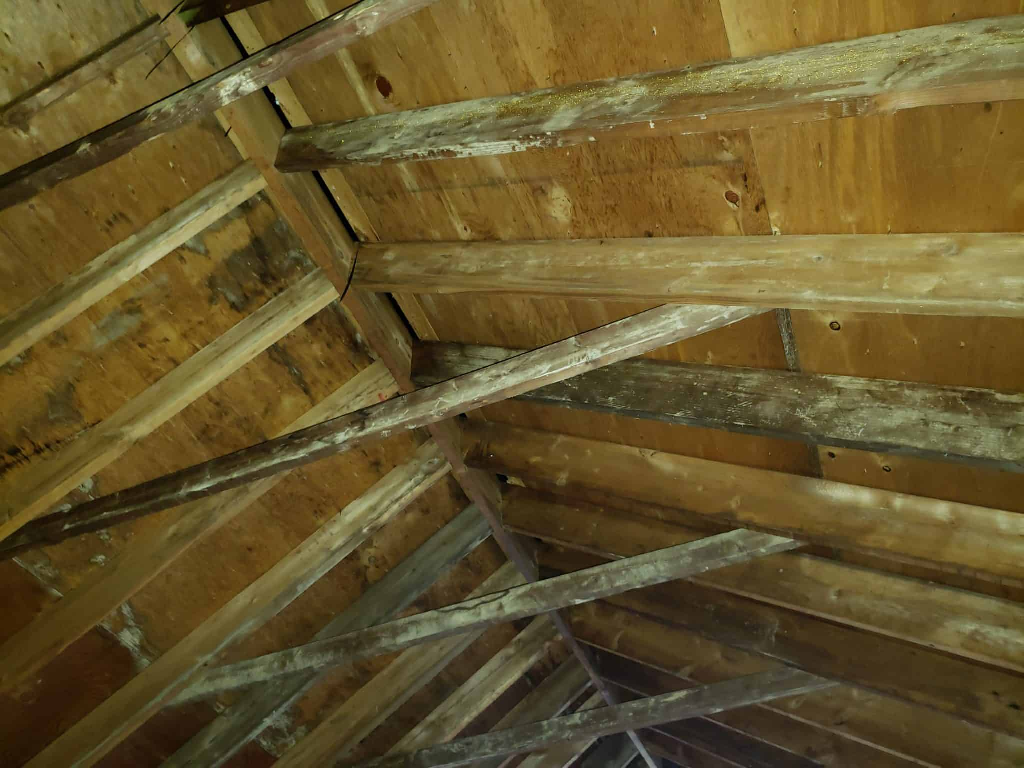 Maryland Home Inspection Water Damage Mold Attic