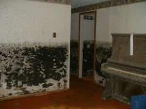 Baltimore Home Inspector Mold Damage