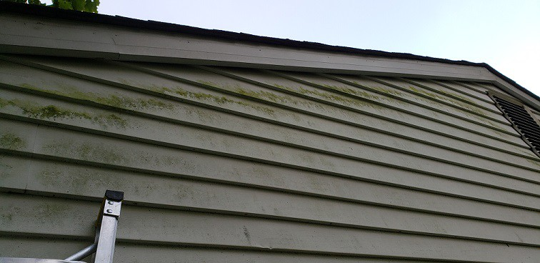 Algae growth on siding materials during Maryland Home Inspection